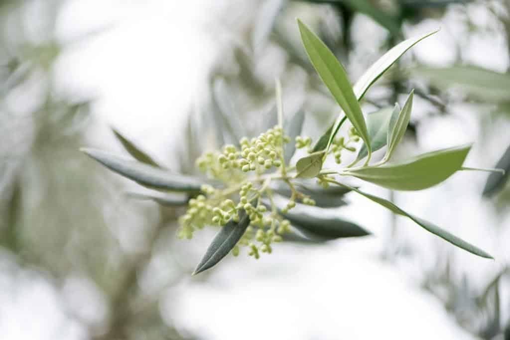 biobetica-aceite-de-oliva-virgen-extra-2
