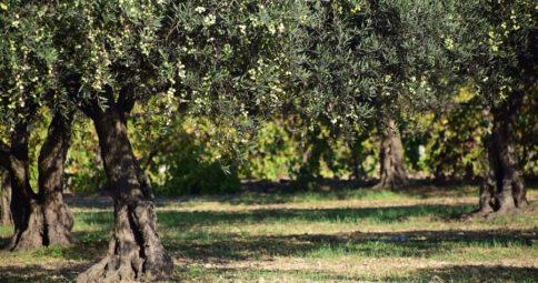 Aceite de Oliva Virgen Extra ecológico bioBética