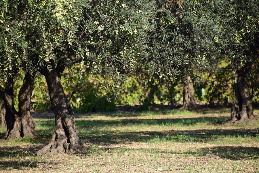 biobetica-productoos-naturales-aove-aceite-de-oliva-virgen-extra-palo-viejo