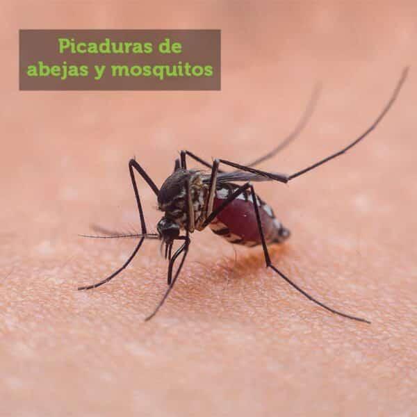 Comprar online Aceite Árbol de té Ecológico. Elimina piojos y remedio natural picaduras mosquitos. Propiedades y usos: gripe, infección de oído,...Precio