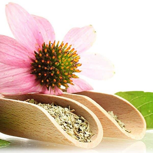 biobetica-infusion-echinacea-2
